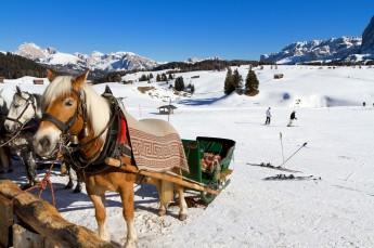 Szczawnica Atrakcja Kulig Stadnina koni Rajd